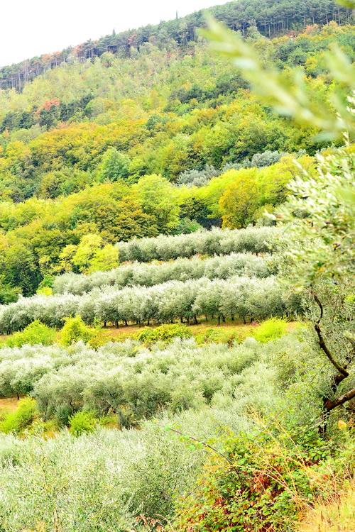 oliviisalu (1)