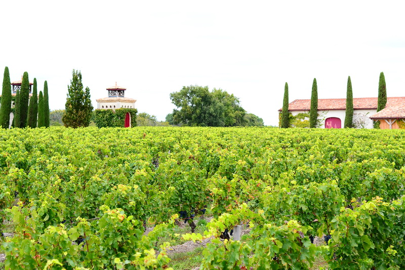 Bordeaux viinamarjaväljad