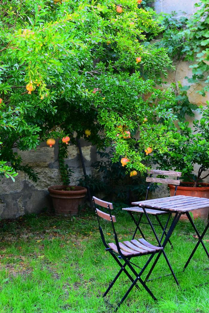 Küpsed granaatõunad oma aiast