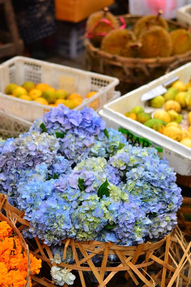 ja minu lemmikud hortensiad